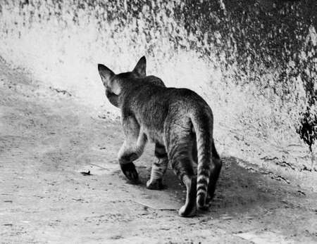 Cat roaming around on terrace