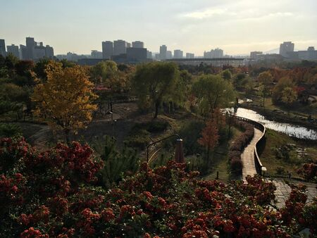 View of Daejeon from the botanical garden in autumn, South Korea. Reklamní fotografie