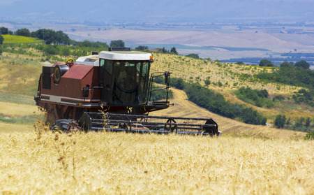 a combine harvester that the golden wheat photo