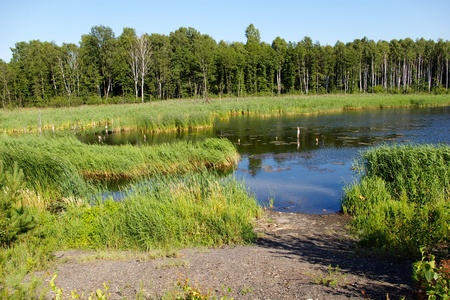 lake landscape in sunny summer day Stock Photo - 10943847
