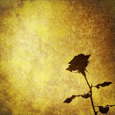 manuscript on parchment: grunge parchment with black rose flower, textile vintage abstract background