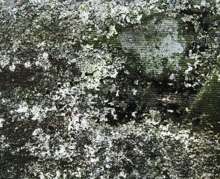 molded: old molded wall texture or background