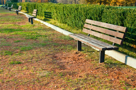 a wooden bench in the park next to the hedge photo