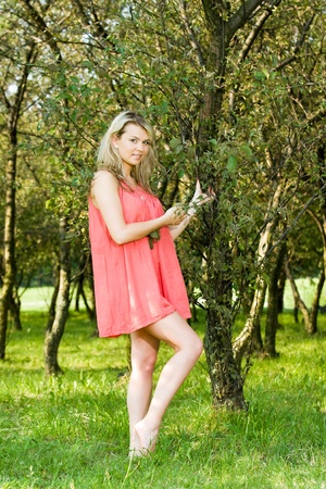 Young beauty woman holding tree branch in an orchard on a lovely sunny summer day Stock Photo - 14796436
