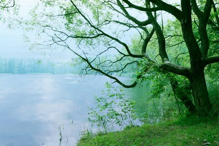 outumn: moody landscape with old tree and lake in the morning as nature background wallpaper scenery Stock Photo