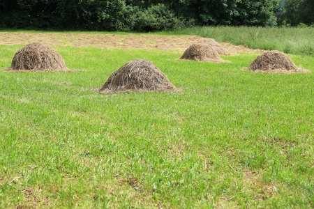 hayride: haystacks on the grass background, countryside landscape