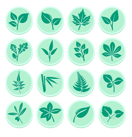 Flat Leaf Icons Vector