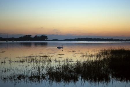 west sussex: Winter Swan Sunset - Bosham, West Sussex, England