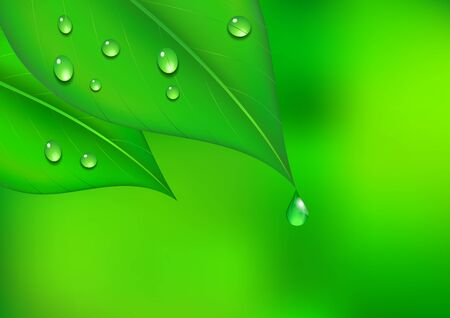 Leaf pattern with Water Drop Illustration