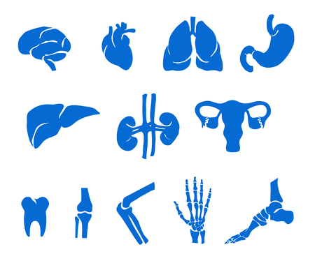 Organs of the Body and Bones, Medical Healthcare illustrations.