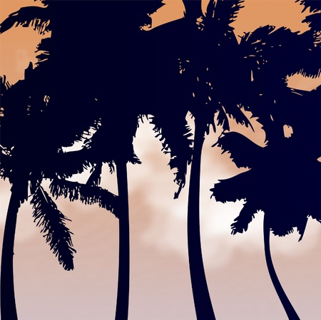 sunset painting: Palm trees silhouettes vector  Illustration