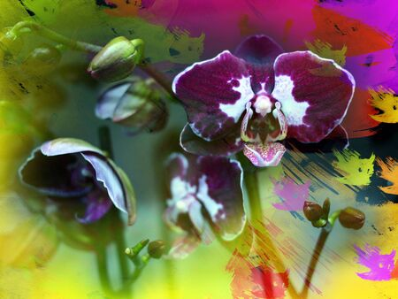 artistic flower: Purple orchid on painted background
