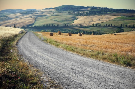 tuscan: Country road in Tuscany, Italy