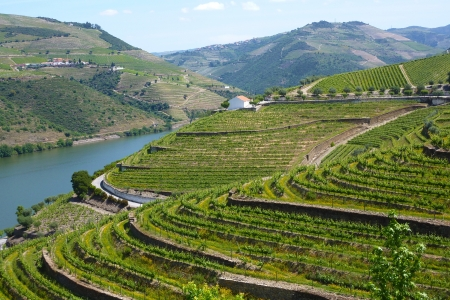 porto: Vineyards of the Douro Valley, Portugal Stock Photo