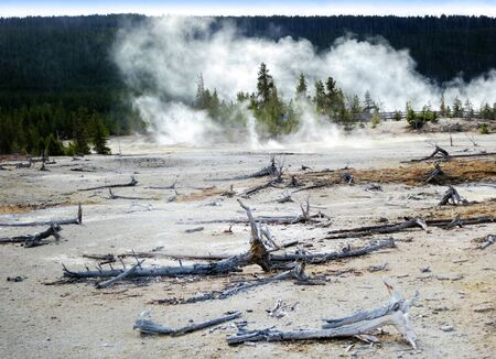 soil pollution: Yellowstone National Park, Wyoming, United States, dead trees caused by sulphuric soil condition in a geothermal area