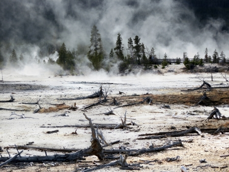 thermal pollution: Dead trees caused by sulphuric soil condition in a geothermal area, Yellowstone National Park, Wyoming,