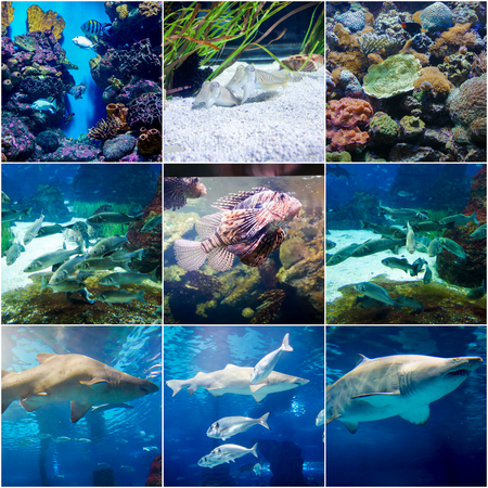 fishery: fishes in aquarium of Barcelona, Spain, 9 collage photos