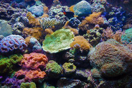 demersal: Colorful underwater flora