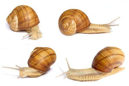 Many slippery snails on a white background Stock Photo