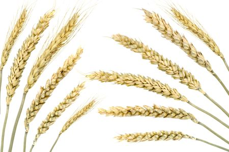 Wheat isolated on white photo
