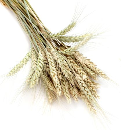 Wheat isolated on white Stock Photo - 5208245
