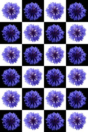 Set of cornflower  isolated on a white background Stock Photo - 5208259