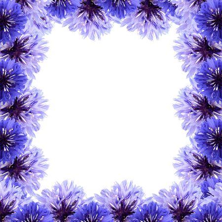 Frame of cornflower on a white background photo