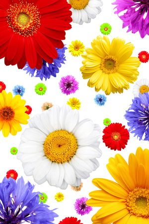 Colorful background of summer flowers isolated on white background photo