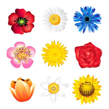 Set of spring flowers isolated on white
