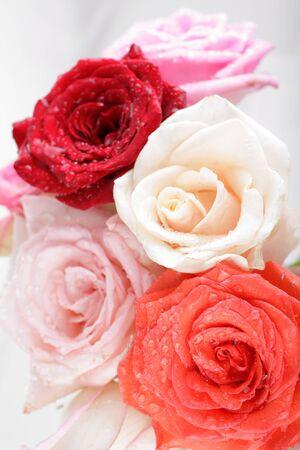 spuria: Primo piano bellissimo sfondo rosa con gocce d'acqua