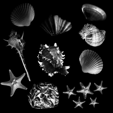 collection of various seashell illustrations isolated on black background illustration