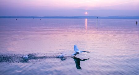 A sun set at sunset, with a pair of white swans on stand