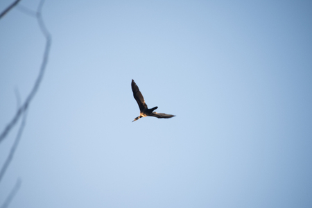 Heron in flight against a blue sky of Lake Garda, Italy. Water bird flying on the background of a lake. Imagens