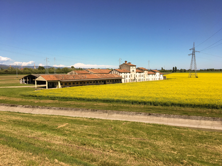 Old farm with canola field with clouds in the sky. Beautiful yellow expanse with farmhouse for the production of oil for green energy. San Giovanni Lupatoto, Verona, Italy.