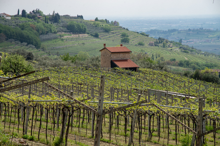 Veronese countryside with vines and farmhouse. Valpolicella, Italy production of wine doc.