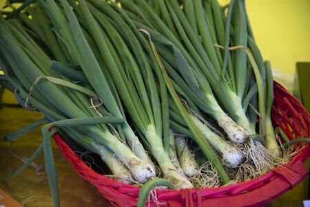 Spring onion bulbs in a red basket, ready to be sold at the market.