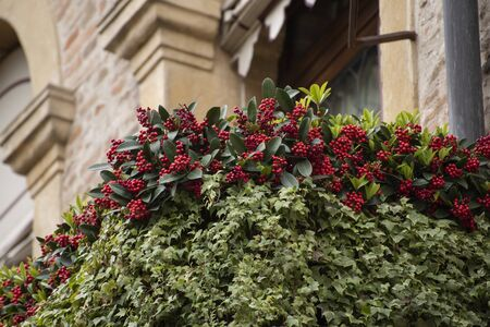 Detail of the ivy-covered balcony of the residence in August 1866 of Prince Amedeo of Savoy, Duke of Aosta, Padua, Italy.