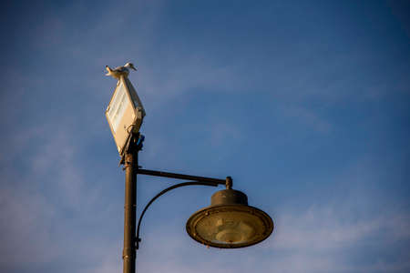 Street lamp with seagull and with two types of lamps, vintage and modern spotlight. Blue sky background with copy space.