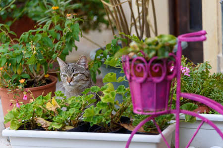 Domestic cat in front of the house. Planters for flower pots. Selective focus.