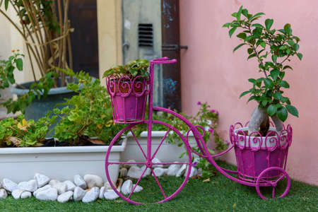 Old vintage three-wheeled bicycle colored in pink and transformed into a flower pot holder. Archivio Fotografico