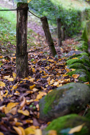 Autumnal path in the middle of the woods. Colored leaves and stones after the rain. Selective focus. Archivio Fotografico