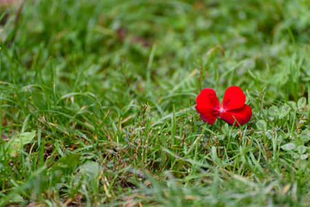 Mountain green grass meadow with red flower.