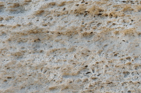 coquina: background coquina closeup
