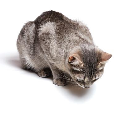 naar beneden kijken: mooie tabby kat liggend op een witte achtergrond