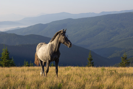젊은 말 아름다운 아침 풍경