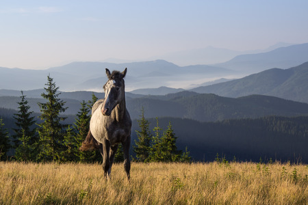 Beautiful morning landscape with the young horse Stock Photo