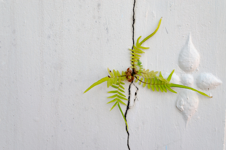 Small Weed Growing Through Cracked White Cement Wall. Stock Photo