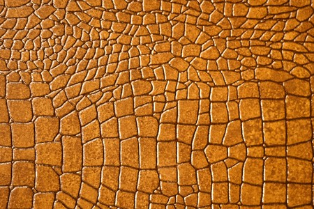 reptile: Brown snakeskin or crocodile texture for background Stock Photo