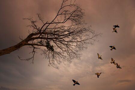 birds in flight with dead tree photo