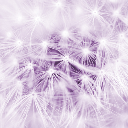 Abstract close-up. Meadow dandelion photo